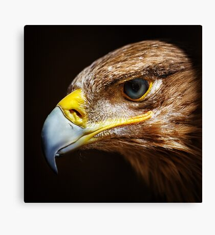 Golden eagle close up portrait Canvas Print