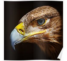 Golden eagle close up portrait Poster