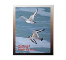HOODED PLOVER LOG ~ The Hooded Plovers of Marion Bay Beach Art Board