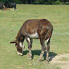 Donkey by WildestArt