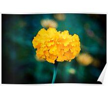 Sunshine Flora Poster