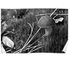 Bitter Bolete in Broom Moss Poster