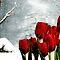 December Avatar ~ Red Tulips