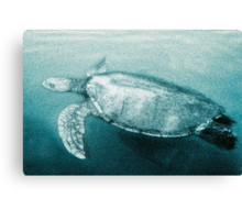 Green Turtle Surfacing - Grand Cayman Canvas Print
