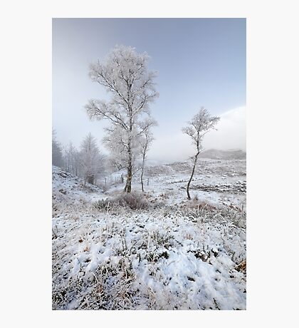 Glen Shiel Misty Winter Trees Photographic Print