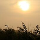 Morning Sun by patjila