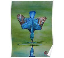 Kingfisher Diving Poster