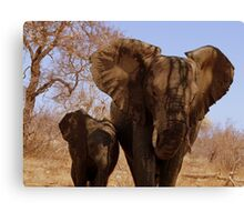 'Mother and Baby' - Balule, South Africa Canvas Print