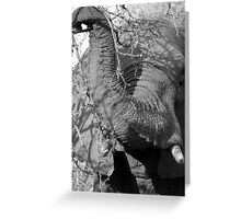 Elephant Close Encounter- Balule, South Africa Greeting Card