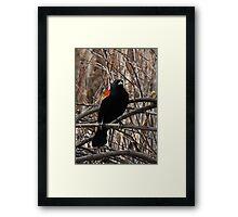 Red winged blackbird Framed Print