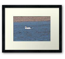 Northern Gannet Framed Print