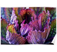 Ornamental Cabbage Rainbow Poster