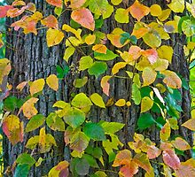 All the Colors of Fall by John Butler