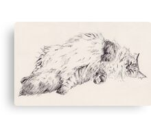 Weird Fluffy Cat  Canvas Print