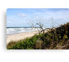 Lone Tree by the Ocean Canvas Print
