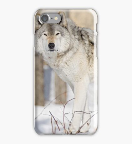 Stare - Timber Wolf iPhone Case/Skin