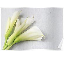 Elegant spring flower, calla lily Poster