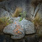 Grasses and Rock by photograham