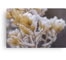 Snowy Sage Brush Canvas Print