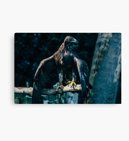 Brown Eagle Canvas Print