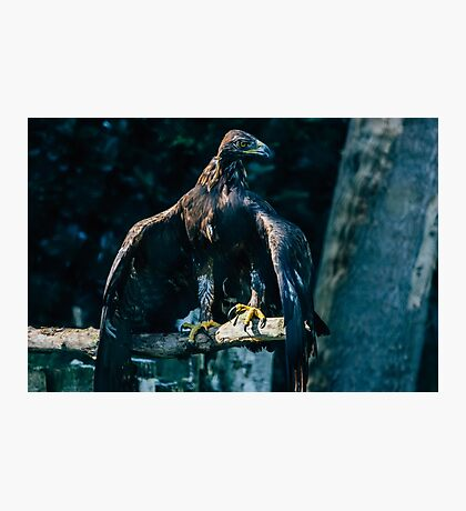 Brown Eagle Photographic Print