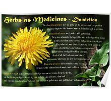 Herbs as Medicines: Dandelion Poster