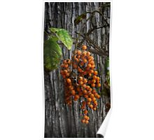 Wild Dangling  plant Poster