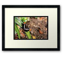 Little Butterfly Framed Print