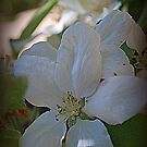 Soft Spring Blossum by Lozzar Flowers & Art