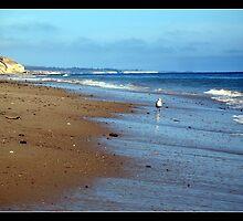 The Lone Gull by Stephanie Palmer
