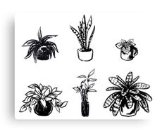 Assorted Houseplants Canvas Print