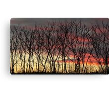 Natural fence Canvas Print