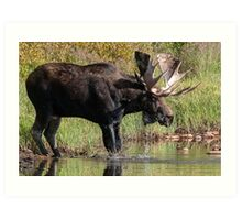Splashing Moose Art Print