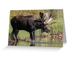 Splashing Moose Greeting Card