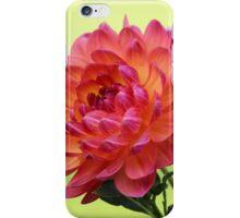 Pinkish Yellowish Dahlia iPhone Case/Skin