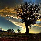 Rural Cootamundra by GailD