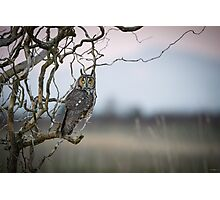 Hunting Imminent -- Long-eared Owl Photographic Print