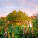 East Parklands - Adelaide, South Australia by Mark Richards