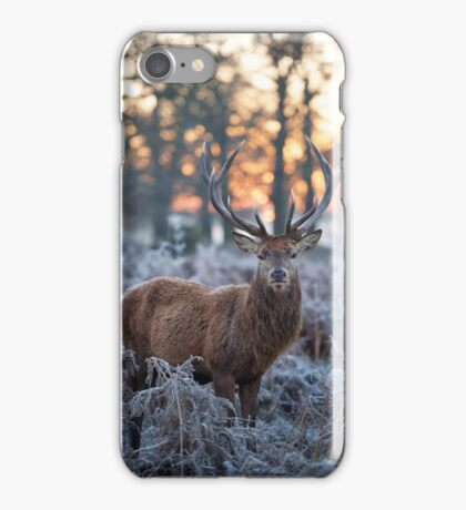 Christmas  Stag 1 iPhone Case/Skin