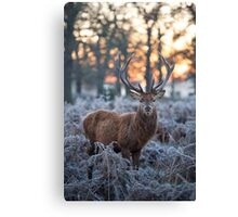 Christmas  Stag 1 Canvas Print