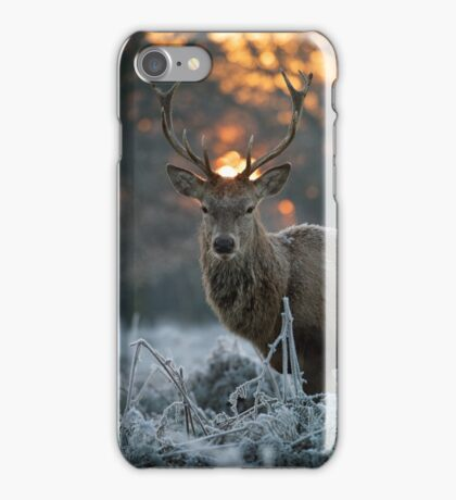 Christmas stag 3 iPhone Case/Skin