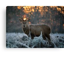 Christmas stag 3 Canvas Print