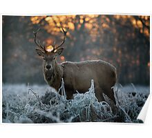 Christmas stag 3 Poster