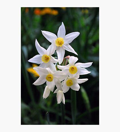 Joyous Springtime!! by Lorraine McCarthy Photographic Print