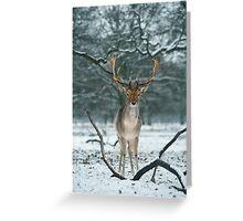 Christmas  Stag 5 Greeting Card