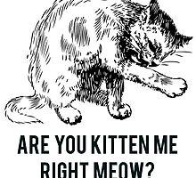Kitten Me Right Meow? by Alan Craker
