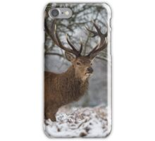 Christmas  Stag 6 iPhone Case/Skin