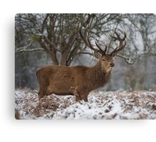 Christmas  Stag 6 Canvas Print