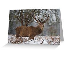 Christmas  Stag 6 Greeting Card