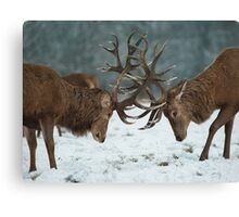 Christmas  Stag 7 Canvas Print